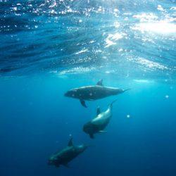 Dauphins dans la mer