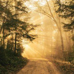 Pèlerinage dans la forêt